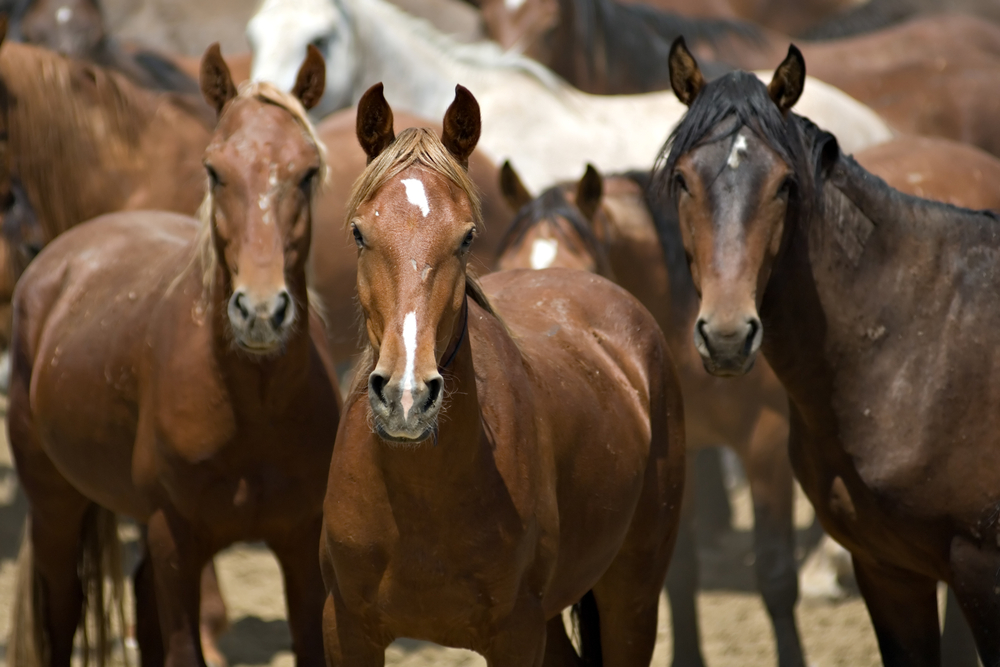 How Can Horses Help My Business, By Jackie Smith